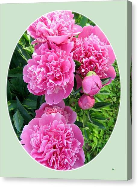 Country Peonies Canvas Print