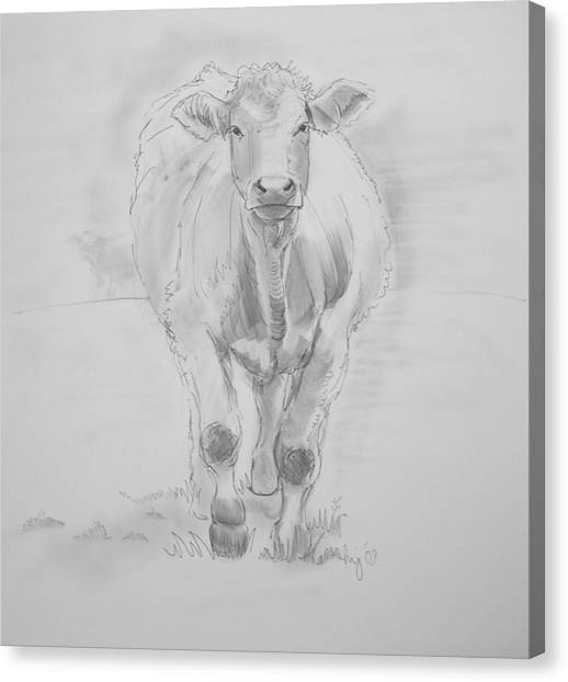 Cow Drawing Canvas Print