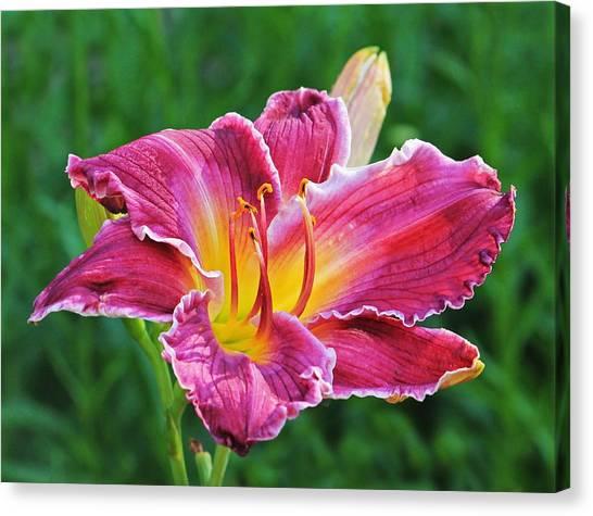 Crimson Day Lily Canvas Print