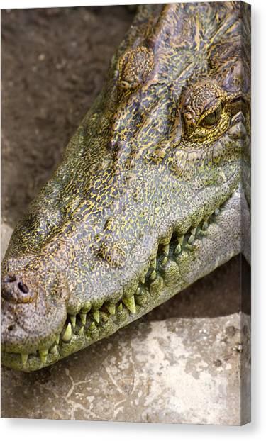 Crocodiles Canvas Print - Crocodile by Jorgo Photography - Wall Art Gallery
