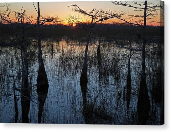 Bromeliad Canvas Print - Cypress Swamp At Sunrise by Jim West