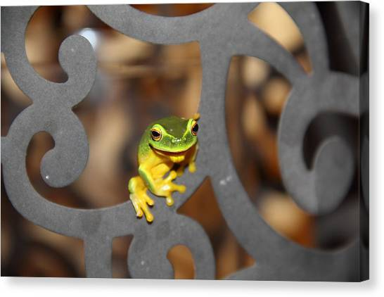 Canvas Print featuring the photograph Dainty Tree Frog by Debbie Cundy