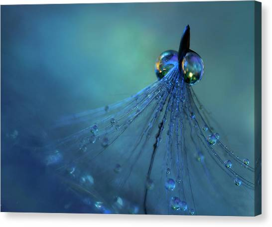 Drops Canvas Print - Dancing Into The Blue Night by Heidi Westum