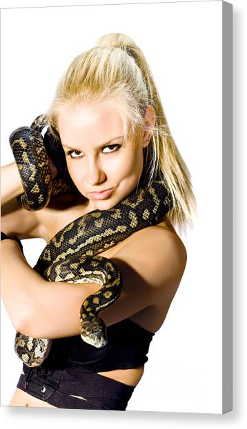 Pythons Canvas Print - Danger Woman by Jorgo Photography - Wall Art Gallery