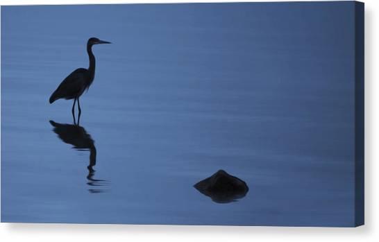 Dark Heron Canvas Print