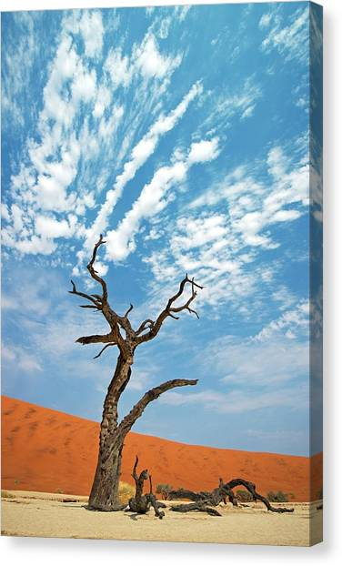 Namib Desert Canvas Print - Dead Vlei In Namib-naukluft National Park by Tony Camacho