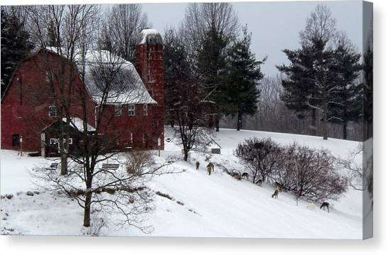 Deer Feeding Below The Barn Canvas Print by Willy  Nelson