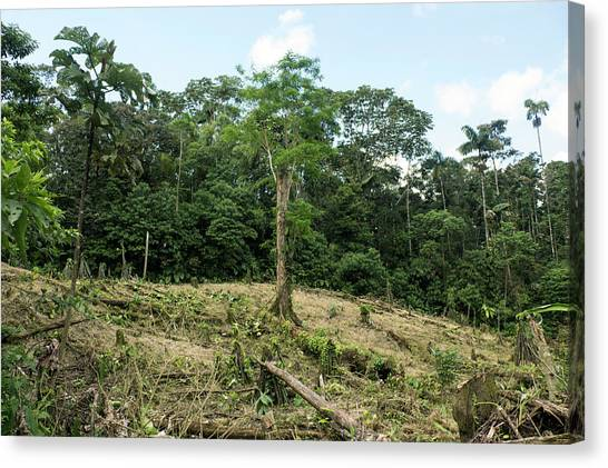 Deforestation Canvas Print - Deforestation In The Ecuadorian Amazon by Dr Morley Read