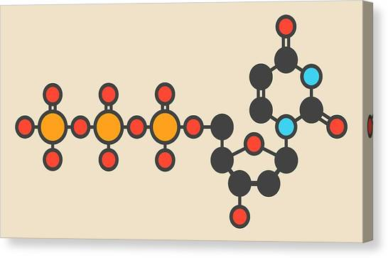 Deoxycytidine Molecule Canvas Print by Molekuul