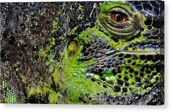 Details Iguana Canvas Print