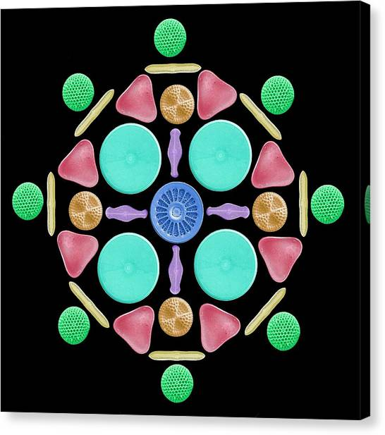 Frustule Canvas Print - Diatoms And Radiolaria by Steve Gschmeissner