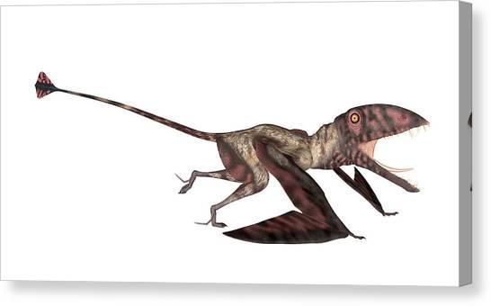 Pterodactyls Canvas Print - Dimorphodon Pterosaur by Friedrich Saurer