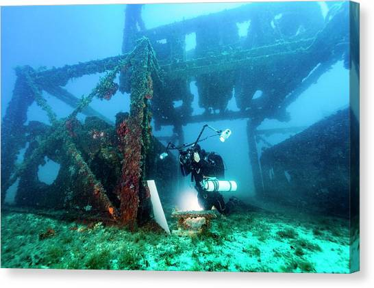 The Prado Canvas Print - Diver Monitoring An Artificial Reef by Alexis Rosenfeld/science Photo Library