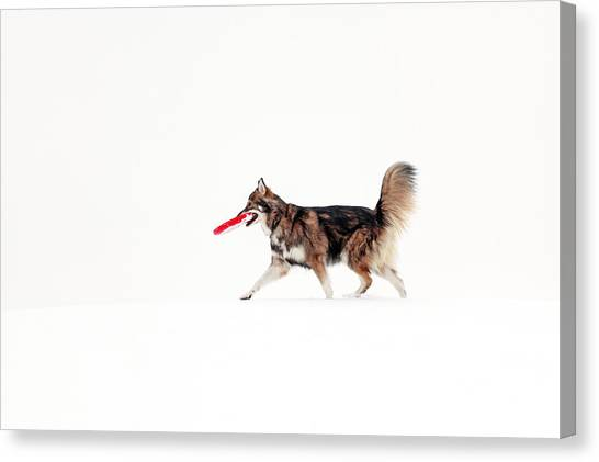 Dogs In Snow Canvas Print - Dog In The Snow by Grant Glendinning