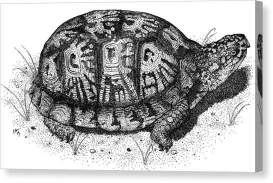 Box Turtles Canvas Print - Eastern Box Turtle by Roger Hall