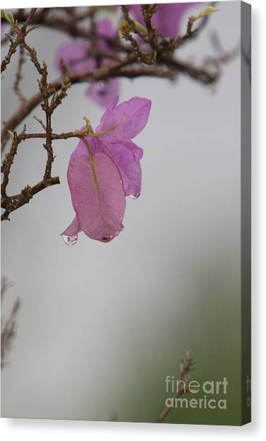 Elegance Of Nature Canvas Print