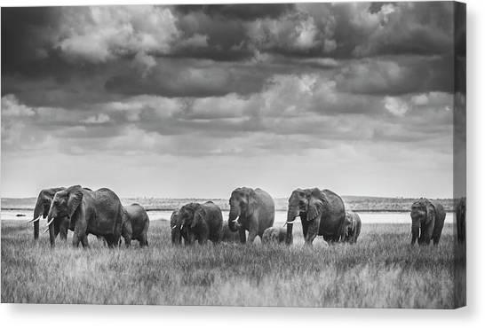 Kenyan Canvas Print - Elephant Family by Vedran Vidak