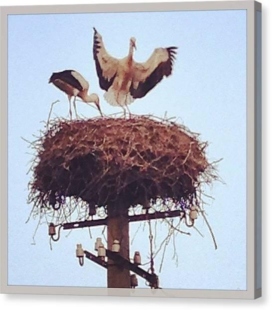 Storks Canvas Print - #estonia #stork #wildlife #beautiful by Matt Taylor