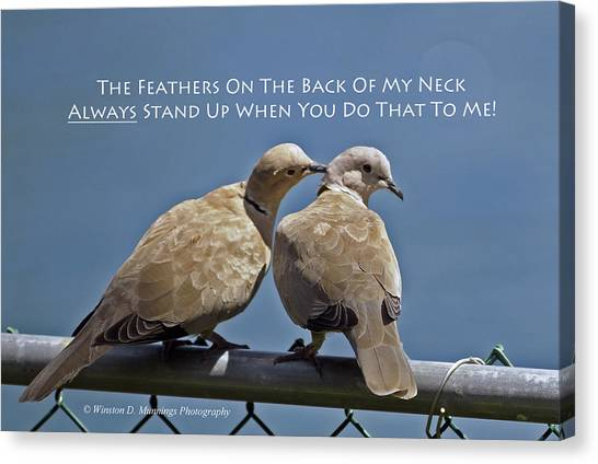 Eurasian Collared Dove Canvas Print