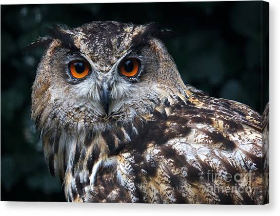 European Eagle Owl Canvas Print