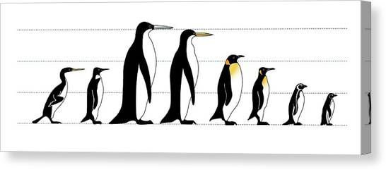 Aptenodytes Forsteri Canvas Print - Extinct And Living Penguin Comparison by Claus Lunau