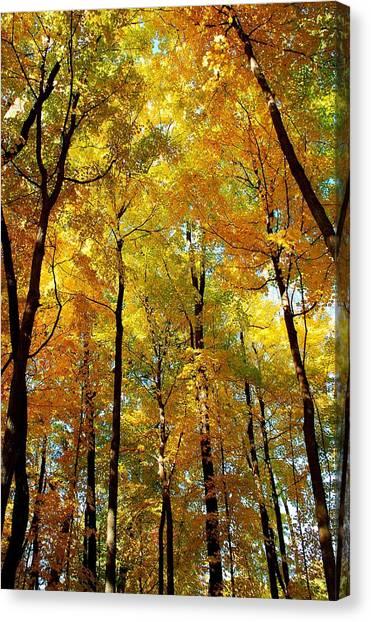 Fall Canvas Print by F Salem