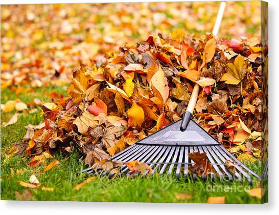 Autumn Leaves Canvas Print - Fall Leaves With Rake by Elena Elisseeva