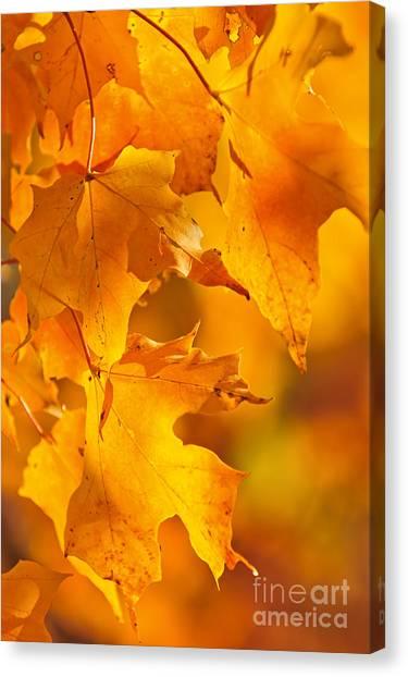 Orange Tree Canvas Print - Fall Maple Leaves by Elena Elisseeva