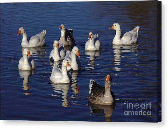 Family Goose Canvas Print