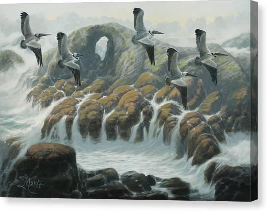 Farallon Pelicans Canvas Print by Marte Thompson