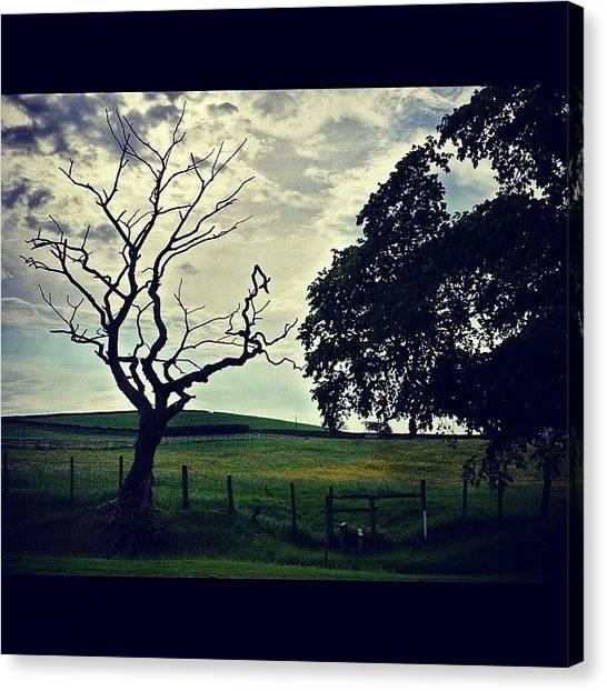 Golfers Canvas Print - #favouritetree #tree #treeporn by David Cockell