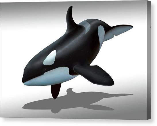 Orcas Canvas Print - Female Killer Whale by Mark Garlick