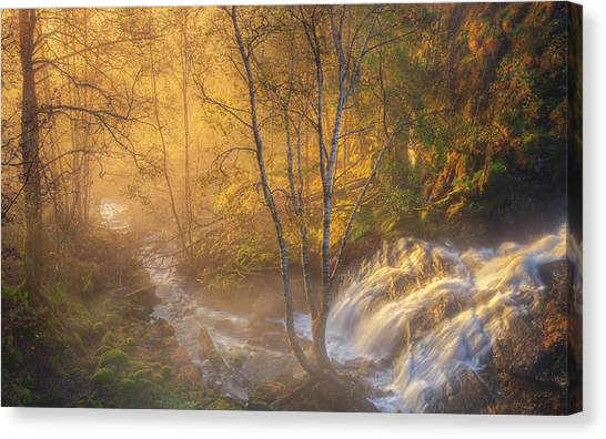 Birch Canvas Print - First Light by Rune Askeland
