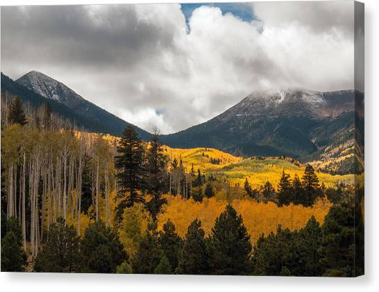 Flagstaff Fall Color Canvas Print