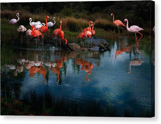 Canvas Print featuring the photograph Flamingo Convention by Melinda Hughes-Berland