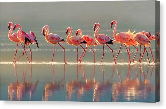 Flamingo Canvas Print by Phillip Chang