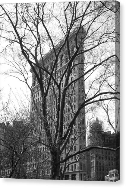 Flat Iron Tree Canvas Print