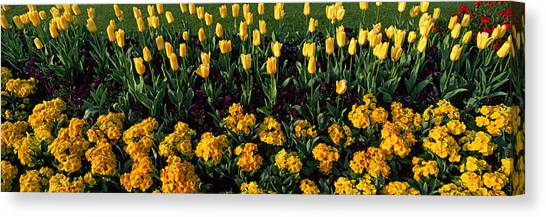 Hyde Park Canvas Print - Flowers In Hyde Park, City by Panoramic Images