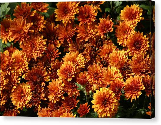 Flowers Canvas Print by James Thornsbury