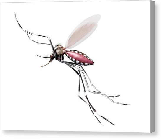 Flying Mosquito Canvas Print by Sciepro/science Photo Library