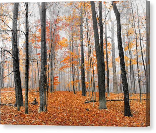 Foggy Morning Canvas Print by Anna-Lee Cappaert