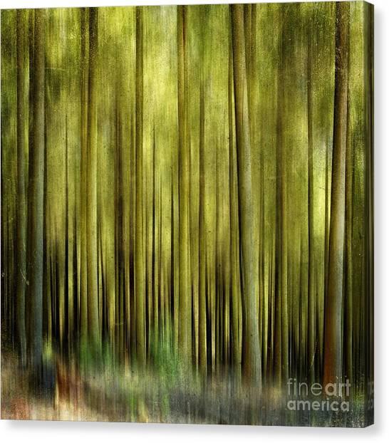 Treeline Canvas Print - Forest by Bernard Jaubert