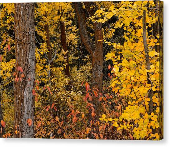 Teton National Forest Canvas Print - Forest Color by Leland D Howard