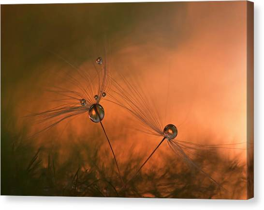 Tenderness Canvas Print - Forest Fire by Heidi Westum