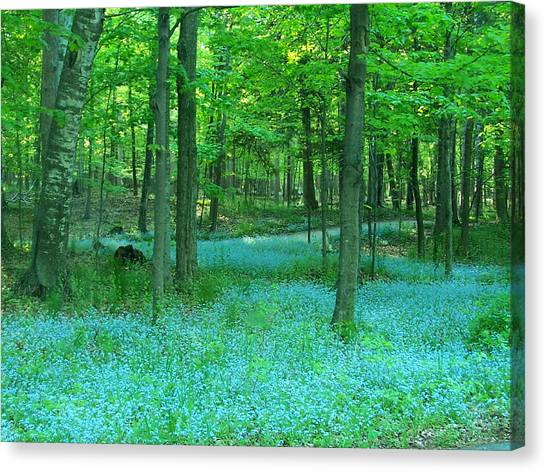 Forget-me-nots In Peninsula State Park Canvas Print
