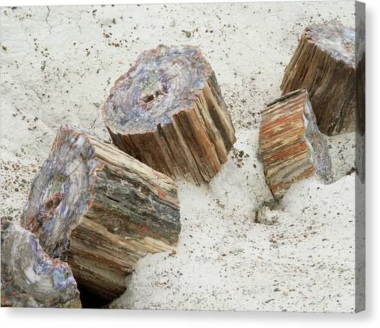Fossilised Trees In Petrified Forest National Park Canvas Print by Simon Fraser/science Photo Library