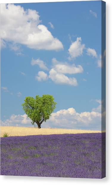 France, View Of Lavender Field With Tree Canvas Print by Westend61