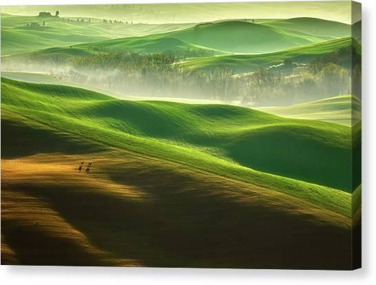 Cypress Canvas Print - Freedom.... by Krzysztof Browko