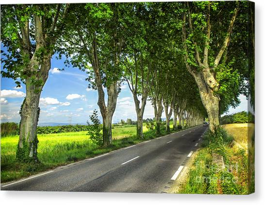 Sycamores Canvas Print - French Country Road by Elena Elisseeva