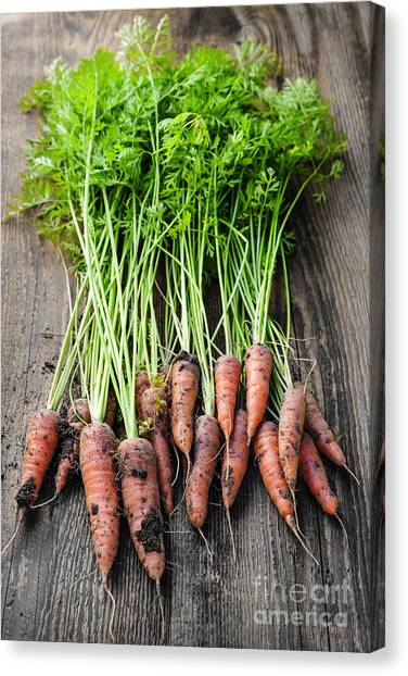 Carrots Canvas Print - Fresh Carrots From Garden by Elena Elisseeva
